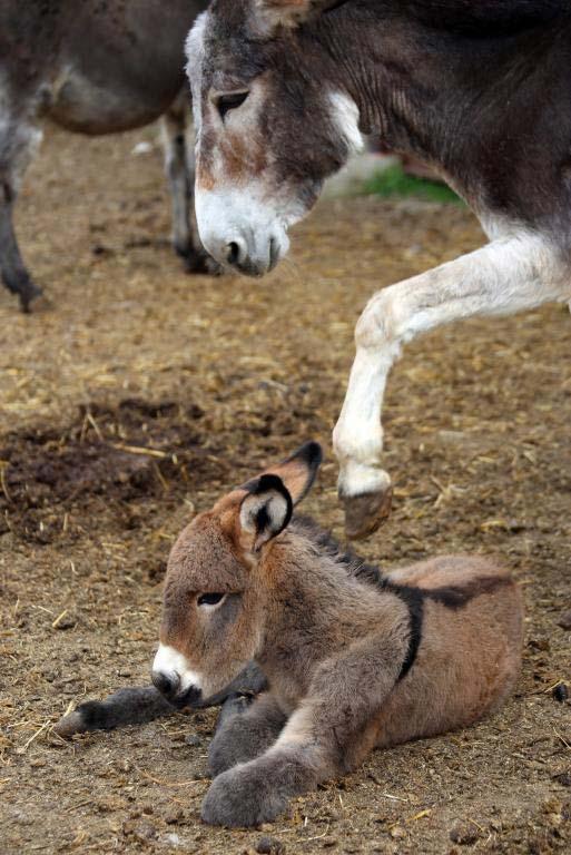 Asinello appena nato