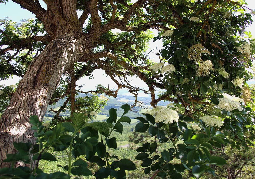 Con vista sul Lago di Montedoglio