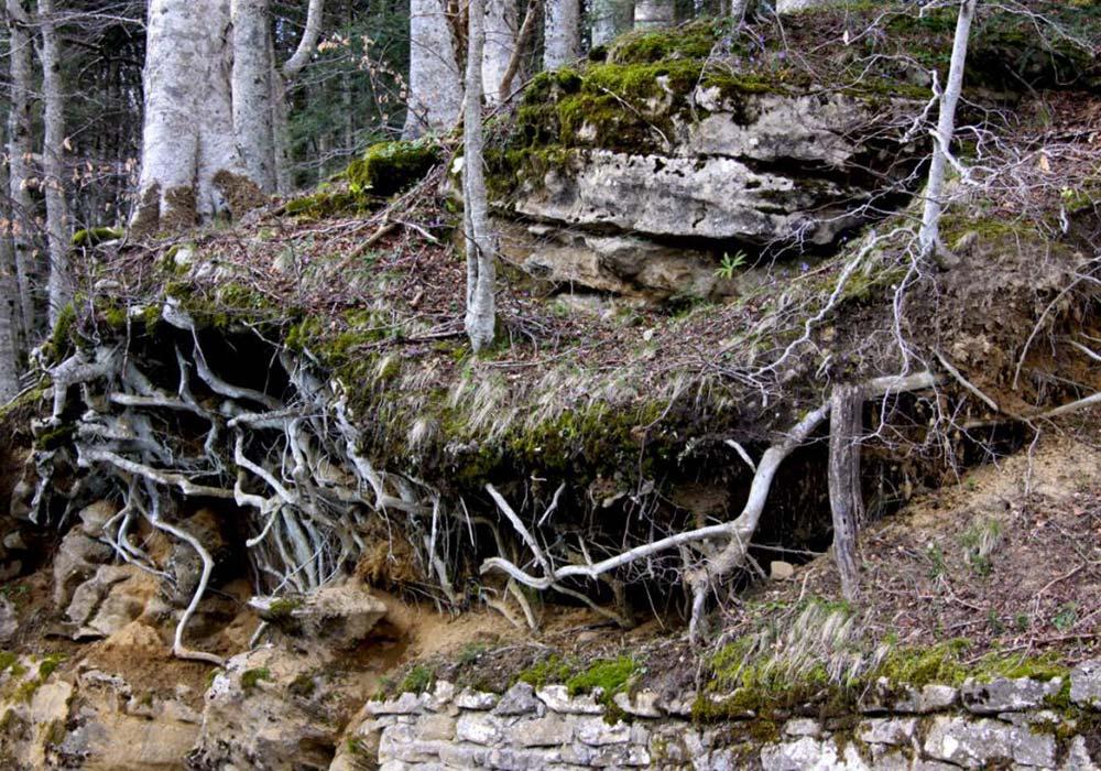 Foresta monumentale de La Verna