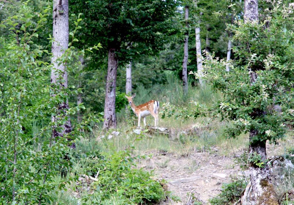 Foreste Casentinesi - Incontro