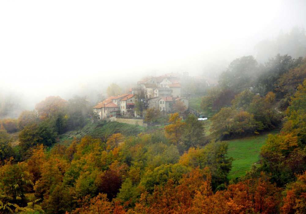 Foreste Casentinesi nella nebbia